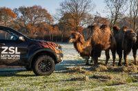 2020 Ford Ranger Raptors, 5 of 6